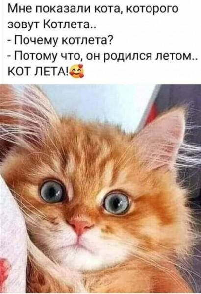 Мем: Кот_лета, Archimedean trousers